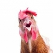 Chicken And Egg Tax Avoidance